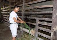 Những lão nông nuôi hươu. Bài viết trên báo điện tử nongnghiep.vn