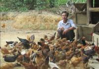 Xóa đói giảm nghèo từ nuôi gà.Bài viết đăng trên báo nguoiduatin.vn
